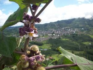 Lulo Landscape
