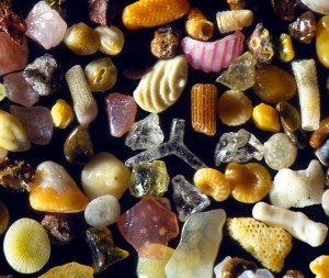 sand-grains-under-microscope-by-gary-greenberg-1