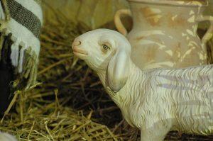 sheep-1136712_1280